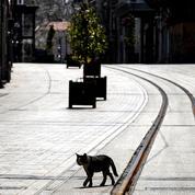 Istanbul, tentaculaire fantôme urbain