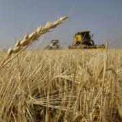 Les matières premières agricoles chahutées par le Covid-19