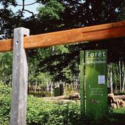La nature, un milieu idéal pour évacuer le stress du confinement