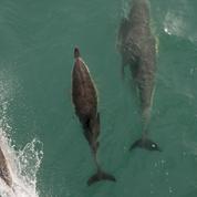 SOS Dauphins en danger