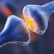 Cerveau: des traces biologiques de la mémoire à court terme