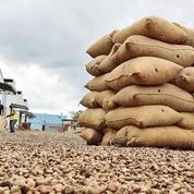En Côte d'Ivoire, champion mondial de noix de cajou, la pandémie aggrave les difficultés des producteurs