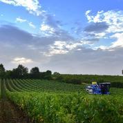 Les viticulteurs en quête de solutions pour éviter les arrachages de vignes