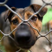 La vente de chiens et chats en animalerie dans le viseur