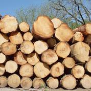 La superficie des forêts exploitées a bondi de 49% ces dernières années en Europe