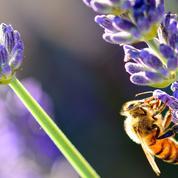 Protection de la biodiversité: la France mise sur la sensibilisation du public