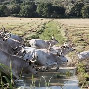 L'agriculture de Toscane parie sur la jeunesse et la filière bio