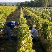 L'agriculture française finit 2019 dans le rouge