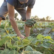 La pandémie favorise la chute des prix agricoles