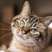 Vacances: mieux vaut faire garder son chat à Saint-Nazaire qu'à Mandelieu…