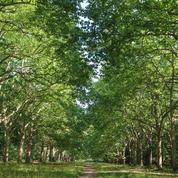Le secret des arbres de France