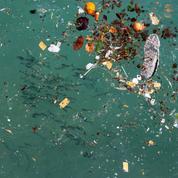 Des millions de tonnes de microplastiques souillent les eaux de l'Atlantique
