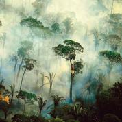 En Amérique du Sud, l'Amazonie et le Pantanal à nouveau dévastés par les incendies
