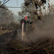 La forêt, victime collatérale de la crise sanitaire