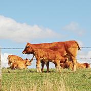 Les éleveurs manquent de fourrage pour nourrir leurs bêtes