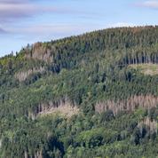 Après un été très sec, les forêts souffrent