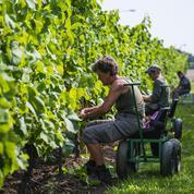 Ces vignerons suédois qui ont parié sur le changement climatique