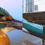 Biomimétisme: quand la nature inspire l'innovation