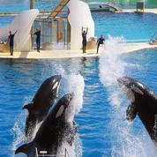 Cirques et delphinariums: fauves et dauphins interdits de spectacles