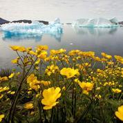 Fonte de la glace au Groenland: les prédictions vertigineuses de chercheurs américains