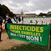 L'Assemblée valide le retour controversé des néonicotinoïdes «tueurs d'abeilles»