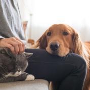 Des services funéraires pour nos animaux de compagnie