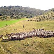 Pourquoi il faut soutenir la laine française