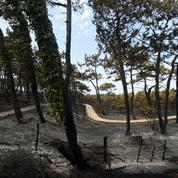 Les travaux pour la survie de la forêt du Pignada ont démarré