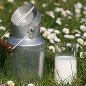 Le lait entier est-il vraiment l'ennemi trop gras de notre santé?