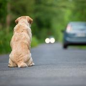 Les ventes en ligne d'animaux de compagnie mieux encadrées
