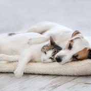 AgroBiothers rafraîchit le marché de l'hygiène pour animaux