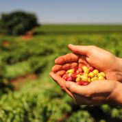 La Chine dope les exportations agricoles du Brésil