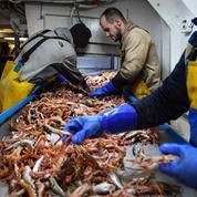 Brexit: exporter poissons et fruits de mer vers le continent vire au casse-tête