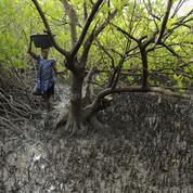 Le peuple des mangroves, un trésor de biodiversité