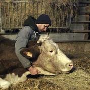 Cette vie d'agriculteur, quelle vacherie sur Canal +!