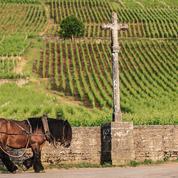Le prince de la Romanée-Conti, de Laurens Delpech: une histoire d'amour avec la vigne