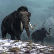 De l'ADN de mammouth de plus de 1,5 million d'années