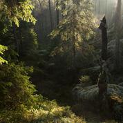 Suède, le paradis perdu des forêts sauvages
