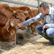 La filière bovine prise au piège des prix bas