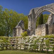 Ronsard à Tours, ses roses et ses plantes