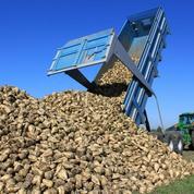 La filière sucre espère sortir de la spirale des prix bas