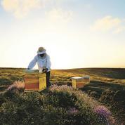 L'abeille, emblème de la maison Guerlain depuis 1853