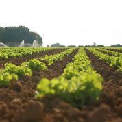 PAC: le gouvernement veut donner la priorité aux protéines végétales et au bio
