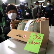 Deux melons japonais vendus dans une vente aux enchères 20000 euros