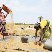 L'Afrique lance aussi ses obligations vertes