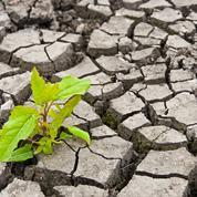 Catastrophes naturelles: la sécheresse coûte cher