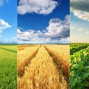 Covid-19: la reprise fait flamber les prix agricoles