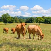L'élevage accroît les gaz à effet de serre