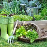 Ce mois-ci au jardin: que planter, semer ou récolter en août?