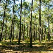 La pénurie de bois déstabilise un secteur vital pour l'économie française